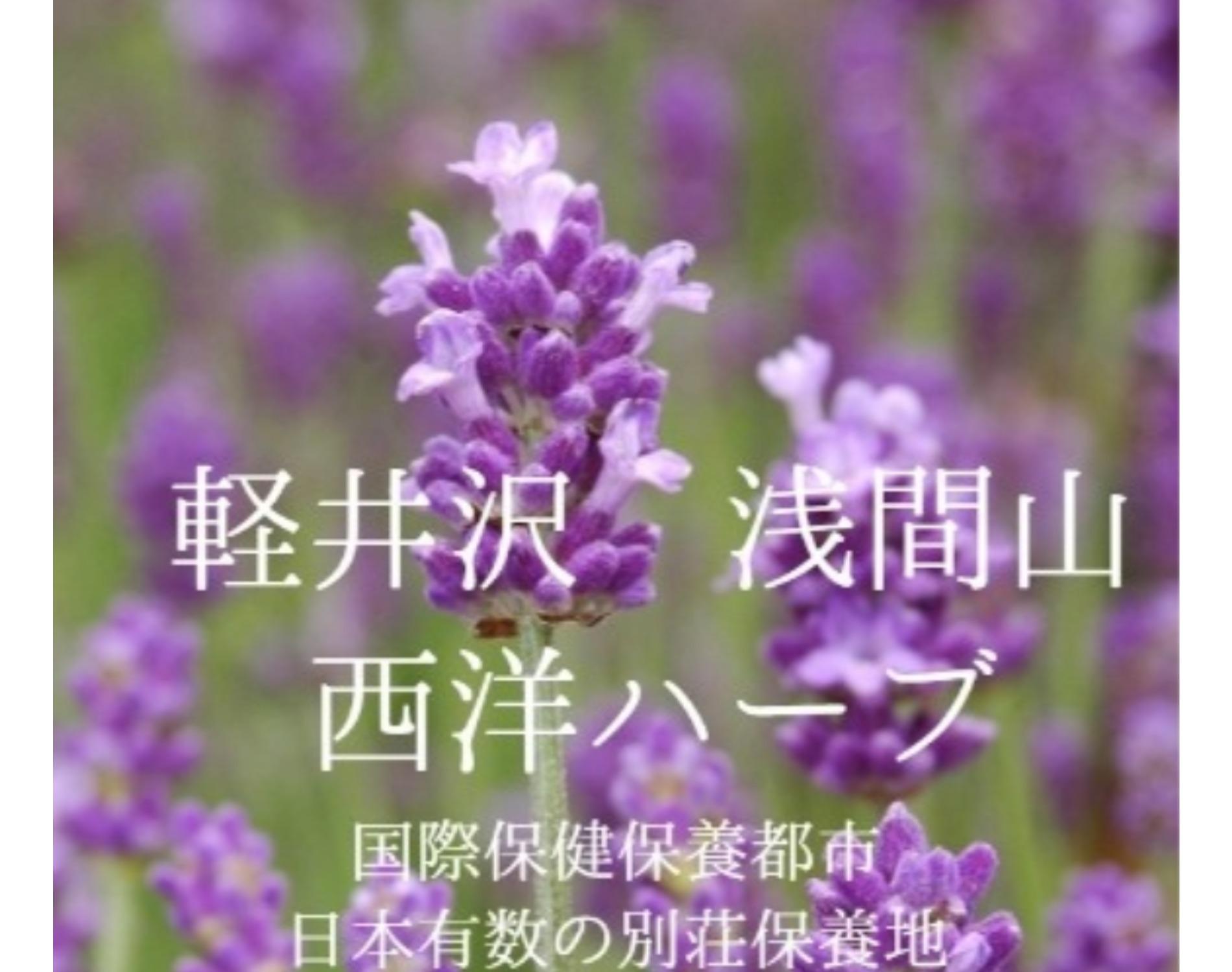 軽井沢西洋ハーブ
